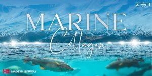 เหนือกว่าคอลลาเจนพรีเมี่ยม สารสกัดใหม่คอลลาเจนจากปลาหิมะนอร์เวย์ ที่ดีที่สุดของ Zen Biotech!!
