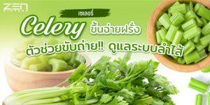 """เซเลอรี่ Celery """" ขึ้นฉ่ายฝรั่ง """" ช่วยขับถ่าย !! ดูแลระบบลำไส้"""